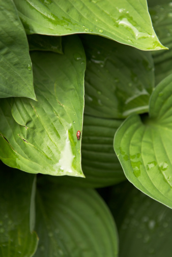 Natural Insect Repellents for Leaf-Eating Insects