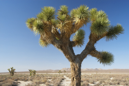 California Desert Animals & Desert Plants