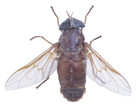 How to Get Rid of Fly Infestations