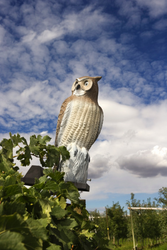 What Pests Are Afraid of Owl Statues?