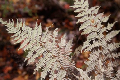 White Insects on Ferns