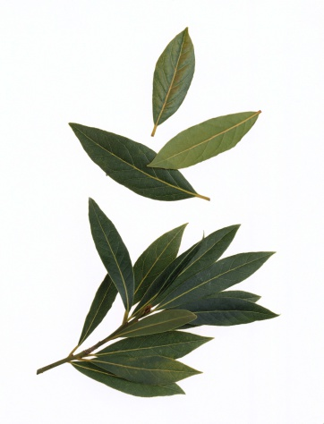 How Do Bay Leaves Repel Bugs?