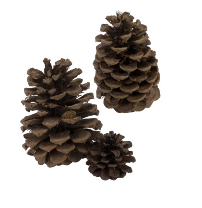 Are Pine Cones Good for Mulch?