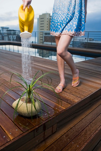 Do Plants Grow Better in Saltwater, Sugar Water or Tap Water?