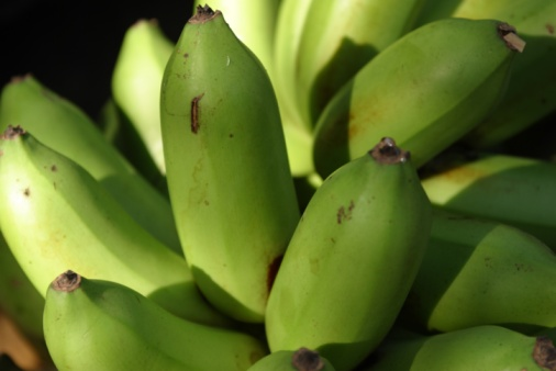 How Do I Tell the Difference Between a Banana Plant & a Plantain Plant?