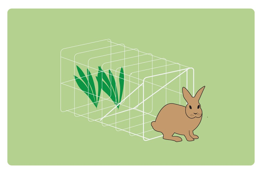 rabbit traps how to keep a rabbit out of your yard homemade rabbit
