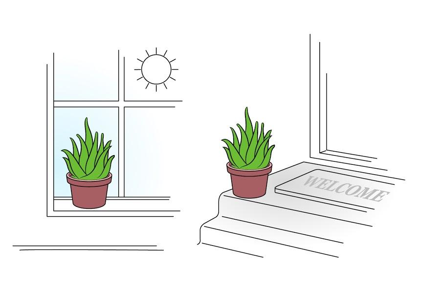 How Often Should I Water An Aloe Vera Plant Ehow