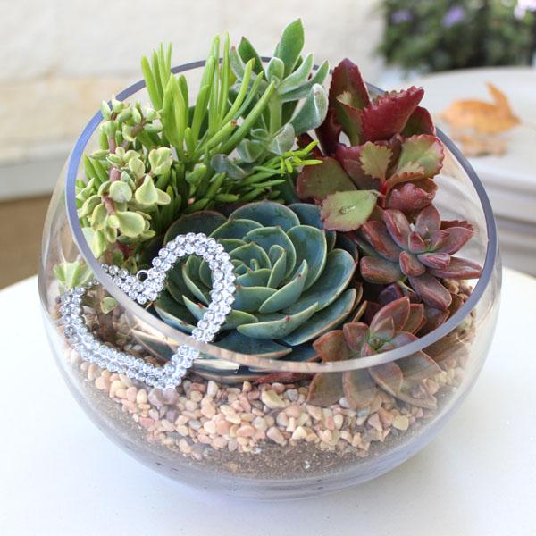 Create Your Own Stunning Succulent Terrarium