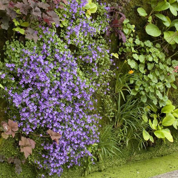 Growing Up: Vertical Gardening Tips