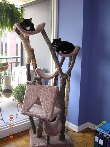 How to build a cat tree with a real tree ehow for Build a cat climber