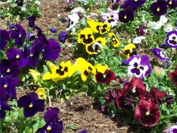 Why are flowers different colors garden guides for What makes flowers different colors