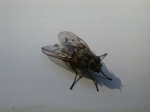 How To Rid Your Home Of Flies Naturally