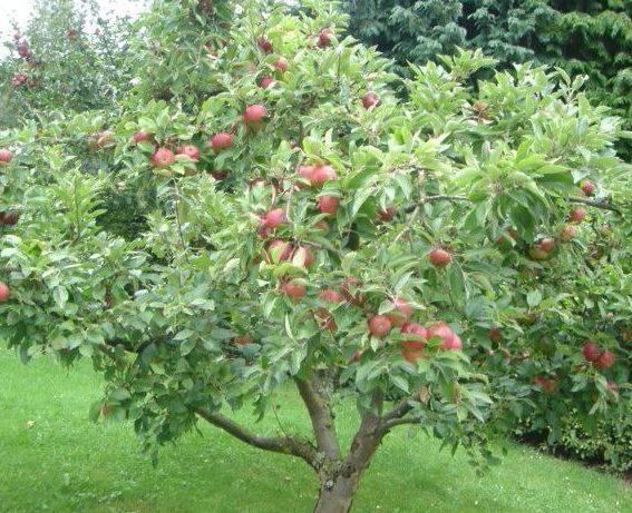 fruit trees spray schedule