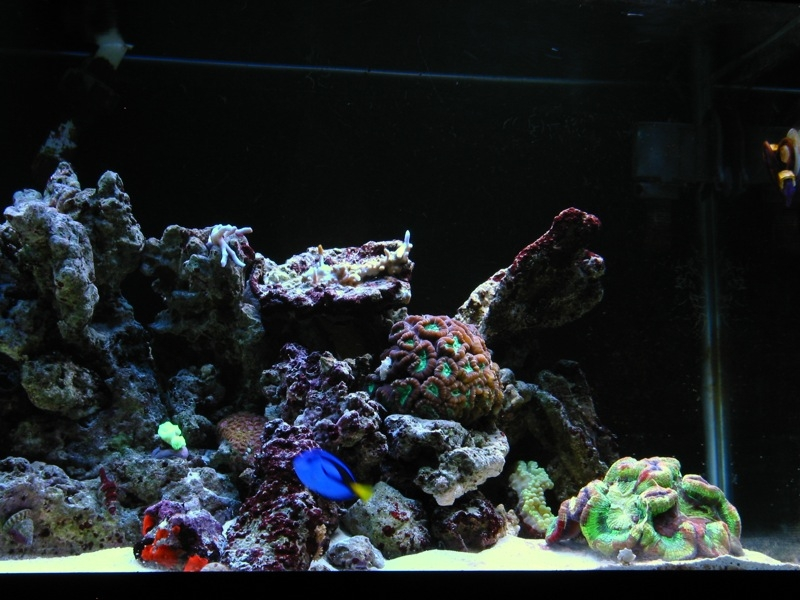 How to set up a nano reef tank ehow for How to start a saltwater fish tank