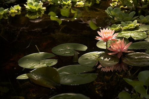 How To Install A Preformed Pond Ehow