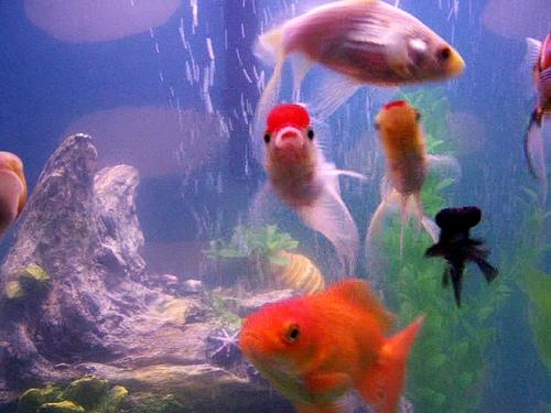 How To Set Up A 29 Gallon Aquarium Ehow