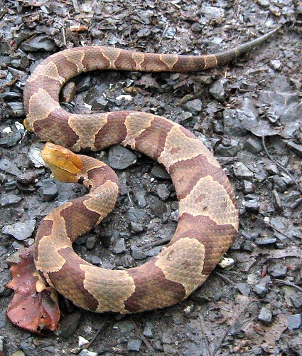 How To Get Rid Of Water Snakes Ehow