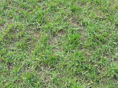 How To Get Rid Of Grass Fleas Ehow