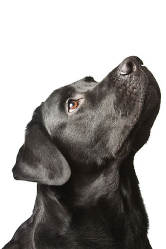 Best Low Residue Dog Foods