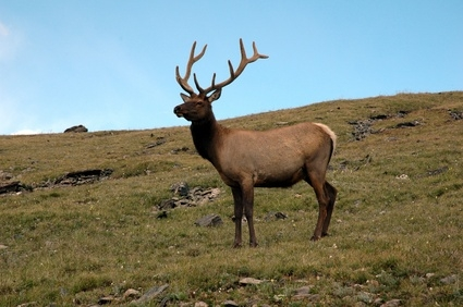 Top Areas in New Mexico for Elk Hunting