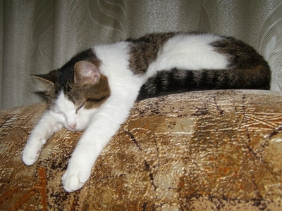 How To Protect A Sofa From Pet Accidents Ehow