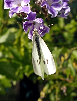 What Does It Mean When Moths Keep Appearing In Your Home