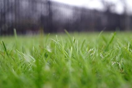 How To Plant Jiggs Bermudagrass Ehow