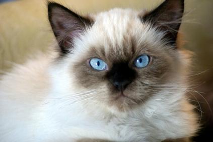 curious cat login