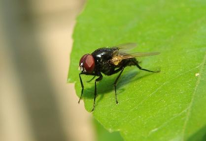 How To Keep Flies Away Outdoors Ehow