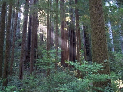What Is Redwood Used For?