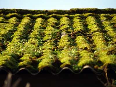 Roof Cleaning Products That Get Rid Of Moss And Mold Ehow