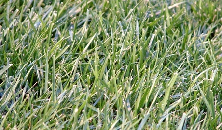 Shade drought tolerant lawn grass for texas ehow - Drought tolerant grass varieties ...