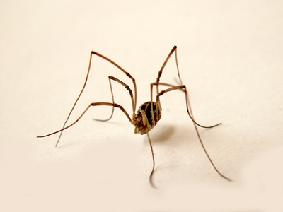 Natural Ways To Get Rid Of Ants Spiders In Your House Ehow
