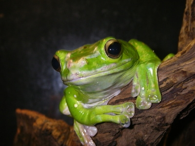 How To Get Rid Of Frogs Ehow
