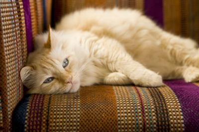 The Best Way To Remove Cat Urine From Furniture Fabric Ehow