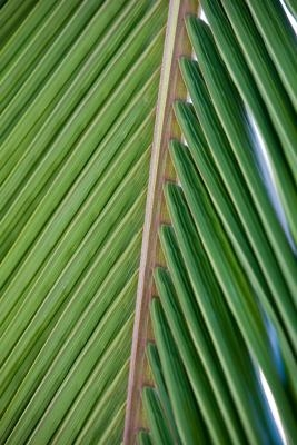 How To Make A Shelter From Palm Leaves Ehow