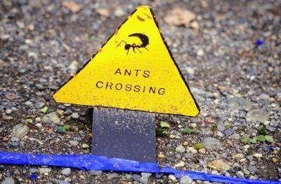 optigard ant gel bait instructions