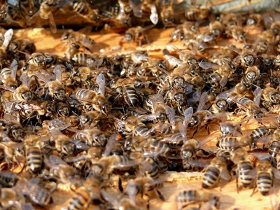 How To Kill Bees With Vinegar And Water Ehow