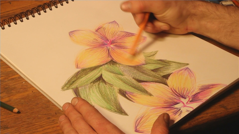 Video How to Draw Flowers With Colored Pencils  eHow