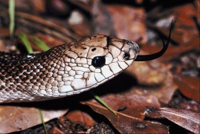 how to get rid of snakes in your house