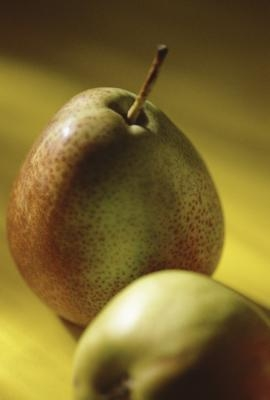 asian pears ripe