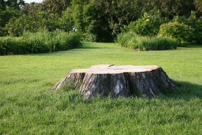 how to make a tree stump rot