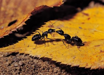 Home Remedies to Get Rid of Flying Ants | eHow