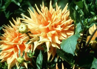 Planting Anemone Bulbs With Pictures Ehow