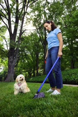 Best Way To Pick Up And Dispose Of Dog Poop
