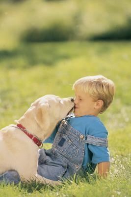 Why does my dog excessively lick fabric? - JustAnswer
