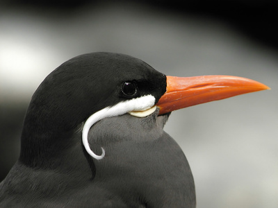 how to stop bird from bleeding