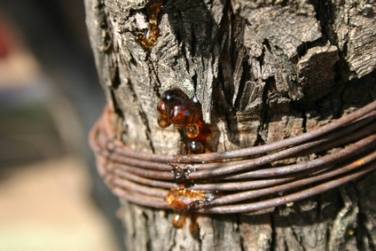how to clean tree sap