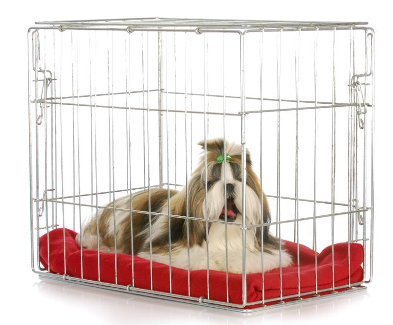 Making A Crate Fun For A Dog