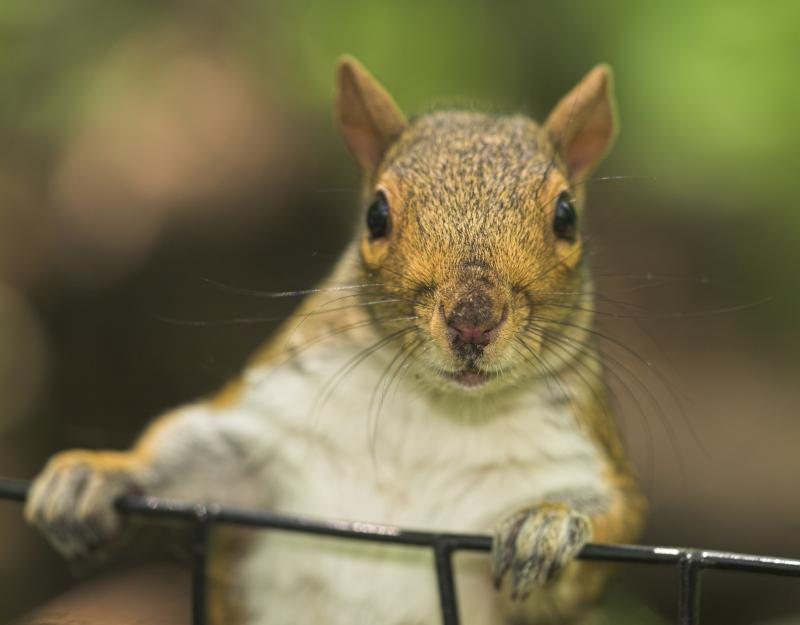 How to keep squirrels from eating flowers ehow - How to keep squirrels from digging in garden ...